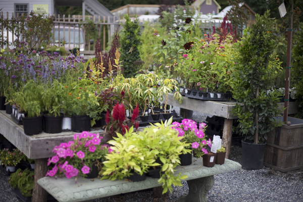 nursery flowers