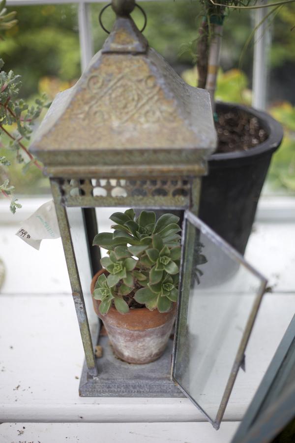 lantern with succulent