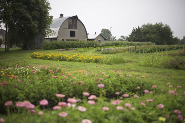 flower farm with barn