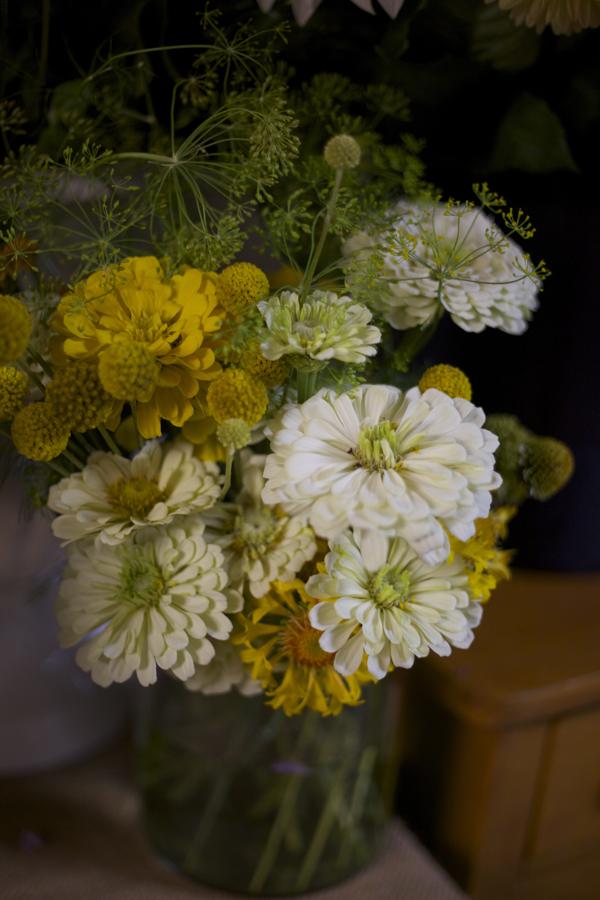 yellow and white zinnias