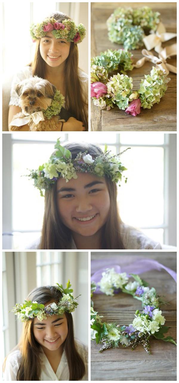 hydrangea flower halos