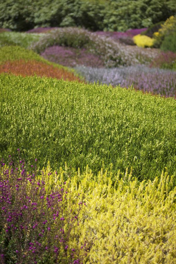 heather garden