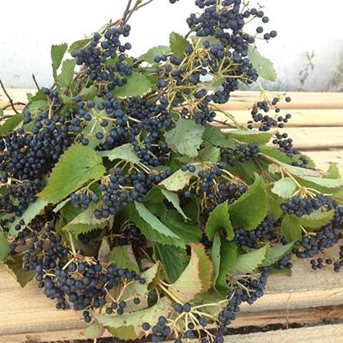 blue berries for arrangements