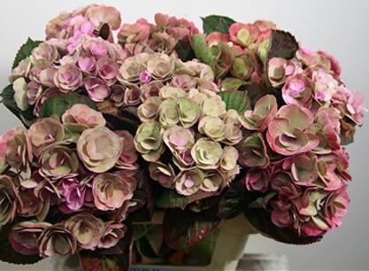 different hydrangea florets