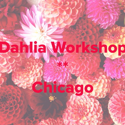 Floral Design Workshop in Chicago all about Dahlias!