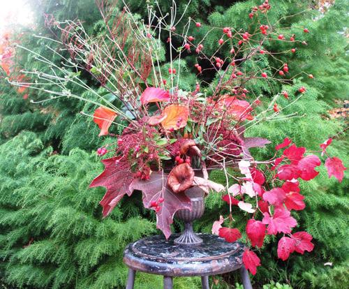 fall foliage and leaf arrangement