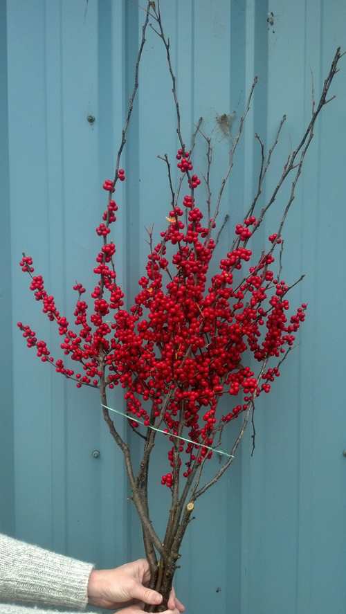 red berries on a stick