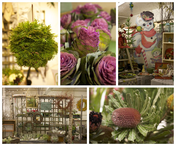 Washington Wholesale Growers Flowers