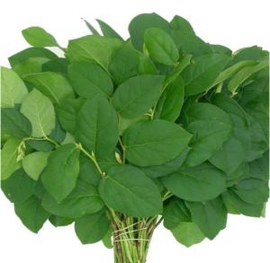 green leaf for flower arrangements