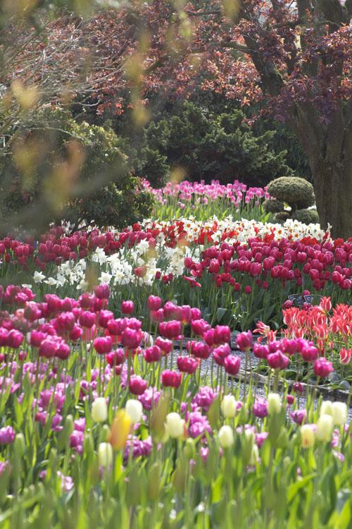 Skagit Tulip Festival Washington State