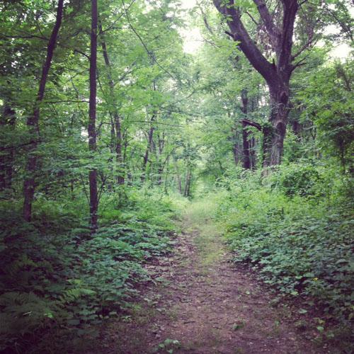 massachusetts woods