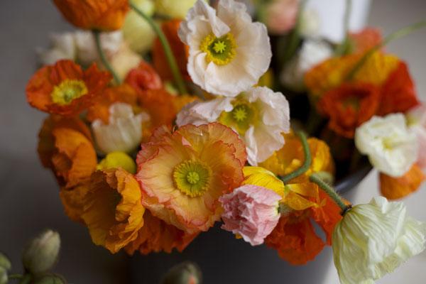 Poppies by Florabundance