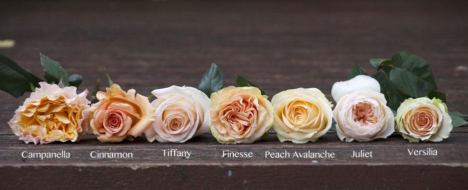 the peach rose study flirty fleurs the florist blog inspiration for floral designers - Peach Garden Rose