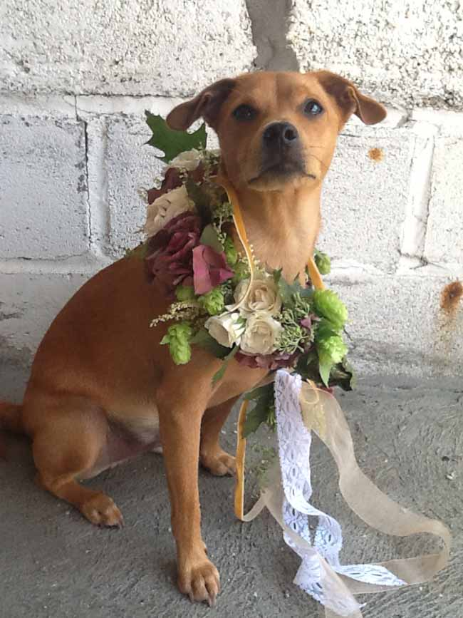 Mt Lebanon Floral; Cash the dog wearing a lovely flower collar