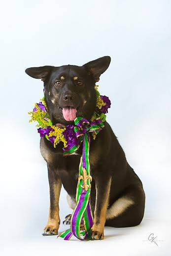 Bee's Wedding and Event Designs, Dog sporting a Mardi Gras inspired floral wreath