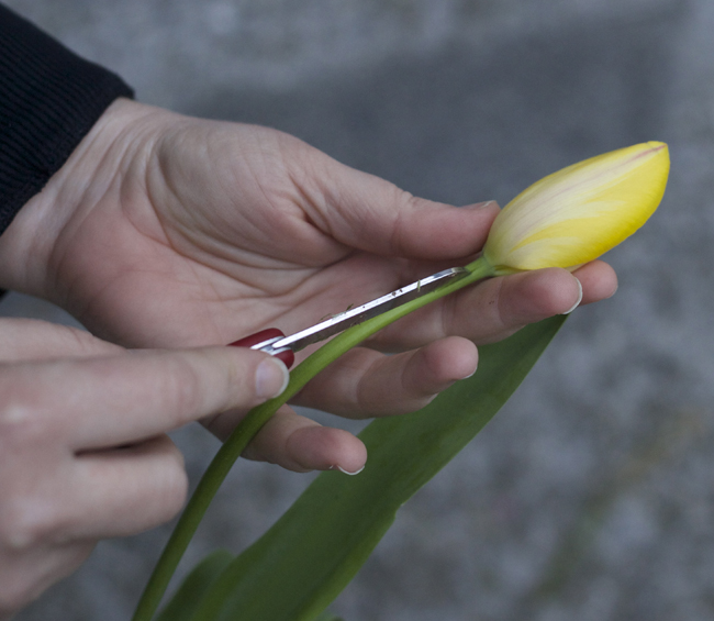 Flirty Fleurs - How to stunt the growth of tulips