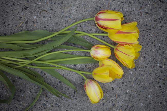Flirty Fleurs, Tulip Treatment