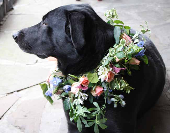 Splendid Stems, Carly is wearing a wreath that includes delphinium, spray roses, passion vine, and snowdrops