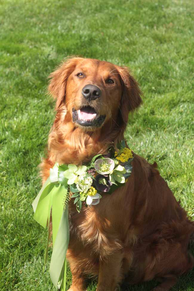 Celebrations Floral, Penny wearing a lovely green, white and yellow floral wreath
