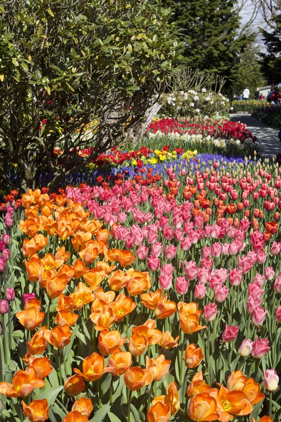 RoozenGaarde, tulip display garden