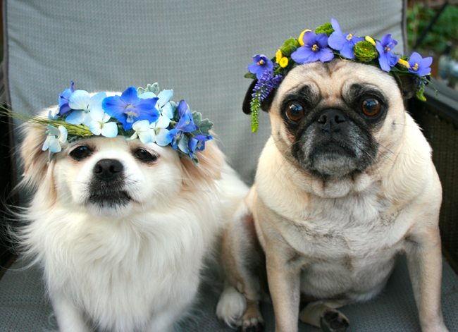 Thistle and Bone, Dogs with flower halos