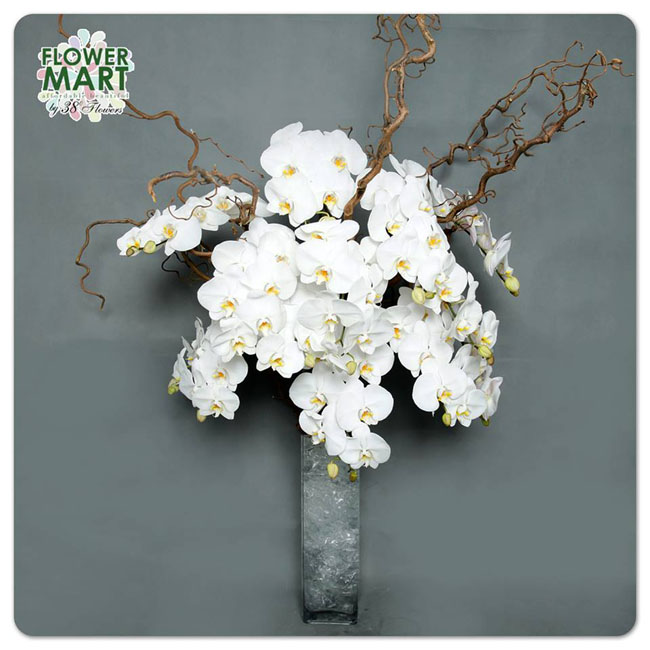 38 Degree Flowers Co, white phalaenopsis orchids and curly willow in a glass vase