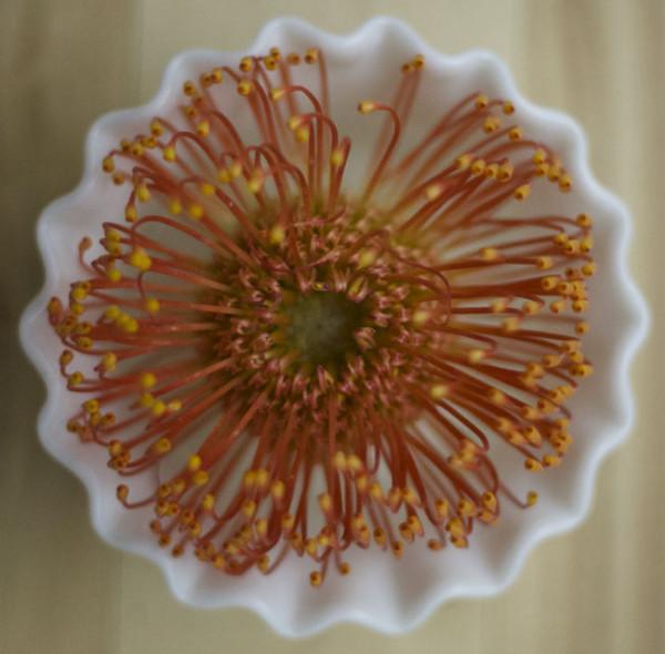 Flirty Fleurs - Orange Pincushion Proteas