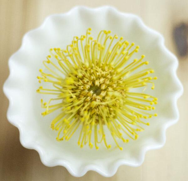 Flirty Fleurs, Yellow Pincushion Protea