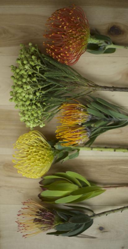 Flirty Fleurs - Resendiz Brother Proteas - Leucospermum 'Pincushion' - Gueinzii, Flame Giant, High Gold and Spider Leucadendron Gold Strike Berzelia Lanigunosa