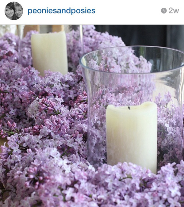Peonies & Posies on Instagram