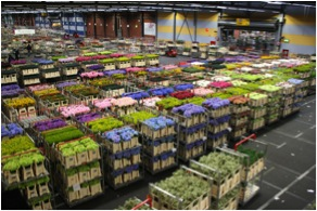Aalsmeer Flower Auction in Holland