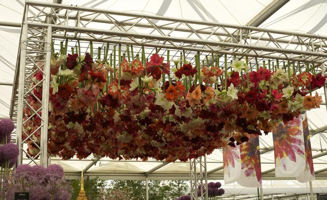 RHS Chelsea Flower Show - Amaryllis