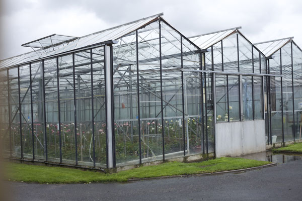 greenhouse seen at David Austin Rose Gardens, England