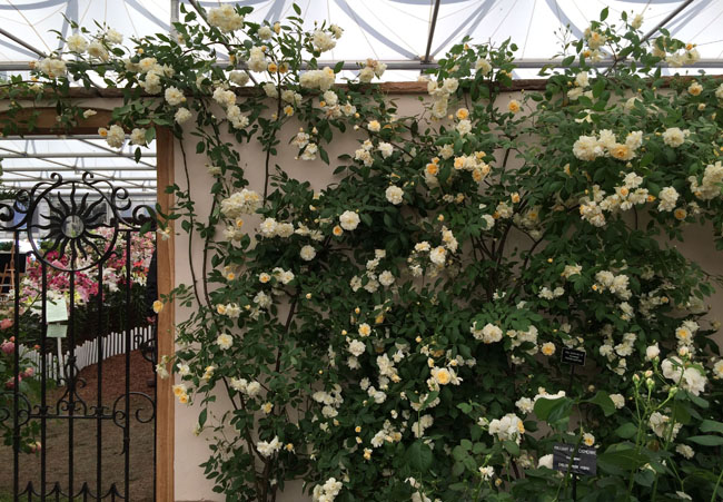 RHS Chelsea Flower Show -