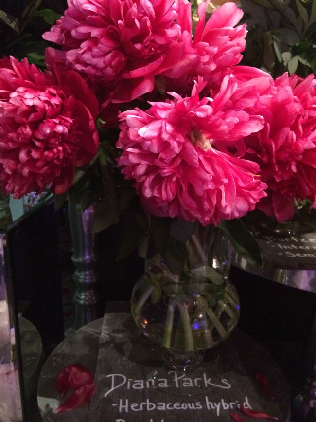 Neill Strain - Passion for Peonies - Diana Parks Peony