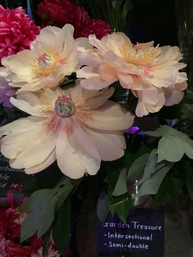 Neill Strain - Passion for Peonies - Garden Treasure