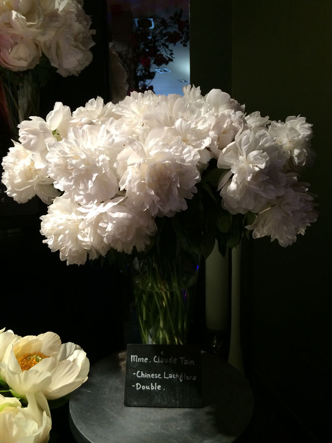 Neill Strain - Passion for Peonies - Mme. Claude Tain Peonies
