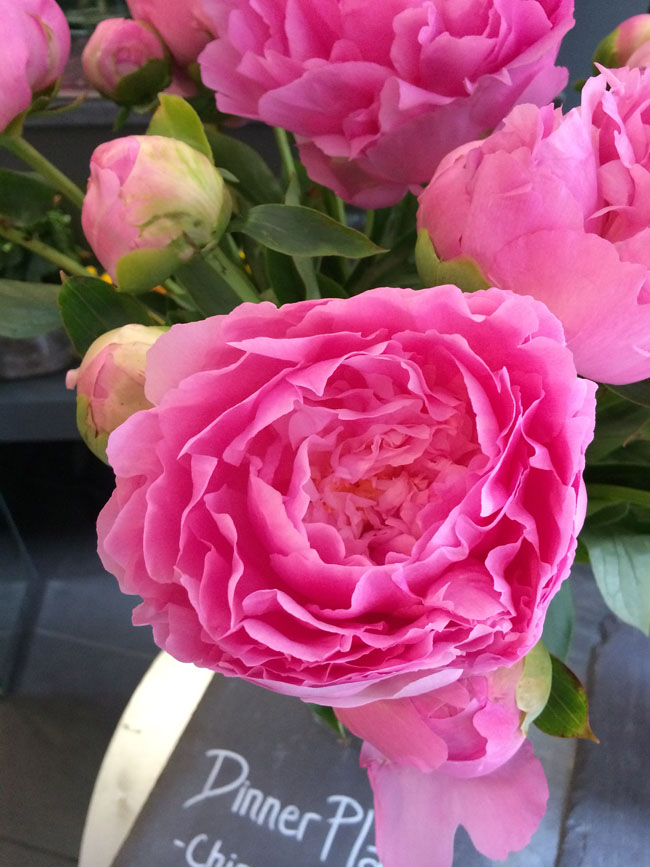 Neill Strain - Passion for Peonies - Pink Dinner Plate Peony