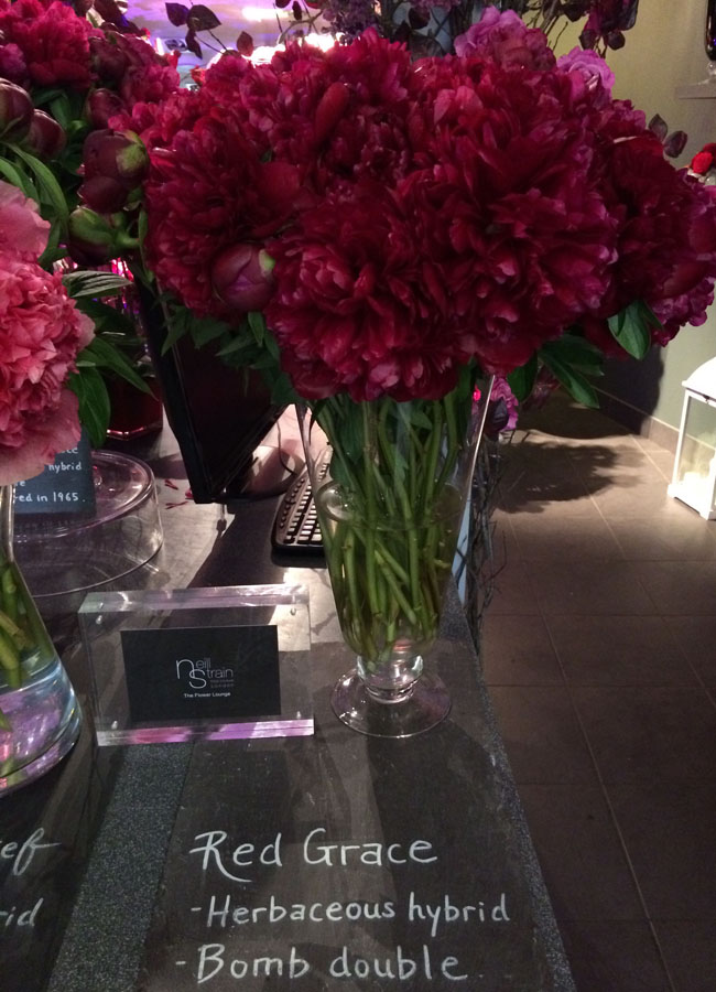 Neill Strain - Passion for Peonies - Red Grace Peonies