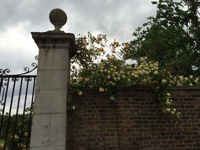 RHS Chelsea Flower Show - Garden Gate and yellow garden roses