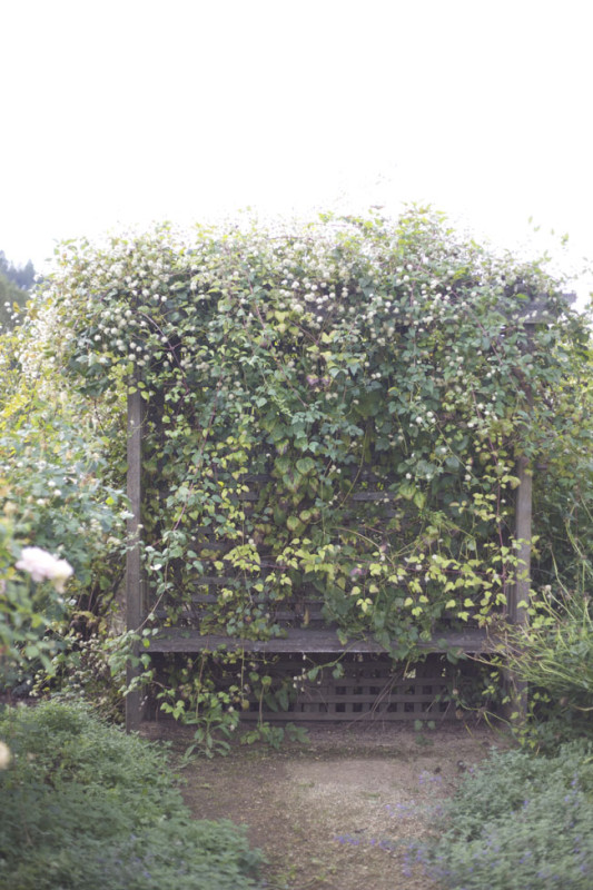 Bench covered in Clematis - CHC