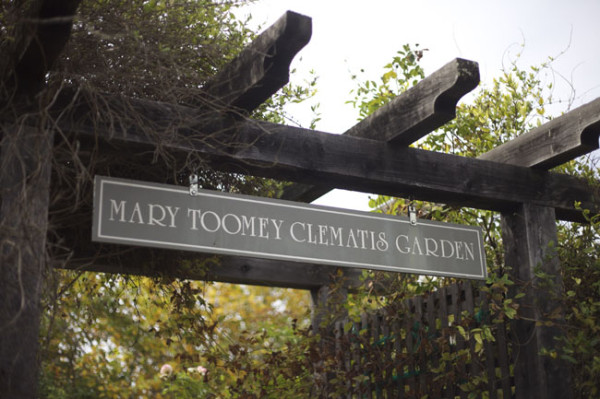 Mary Toomey Clematis Garden