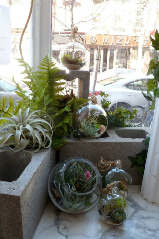 Display of air plants and succulents at The Arrangement NYC