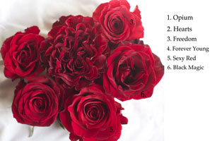 colors of red roses