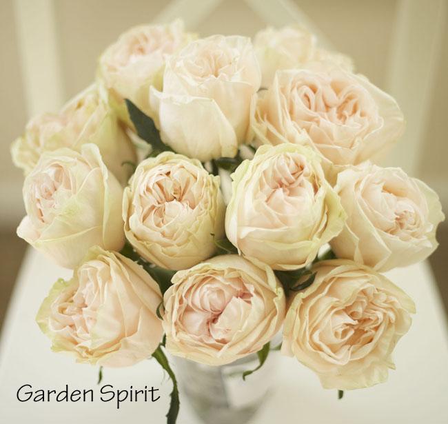 florabundance garden spirit blush peach garden rose - Blush Garden Rose Bouquet