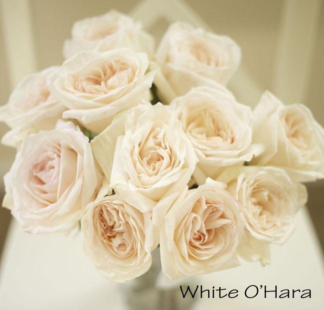 florabundance white ohara garden rose a blush pink cream large rose - Blush Garden Rose Bouquet