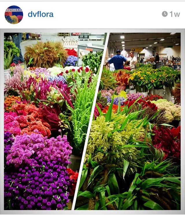 DV Flora Wholesale