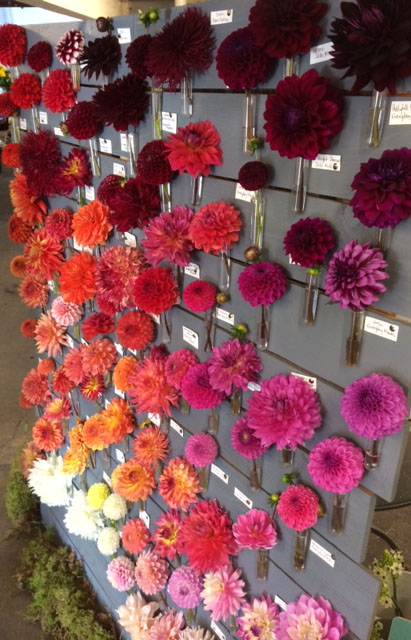 Seattle Wholesale Growers Market - Dahlia Display