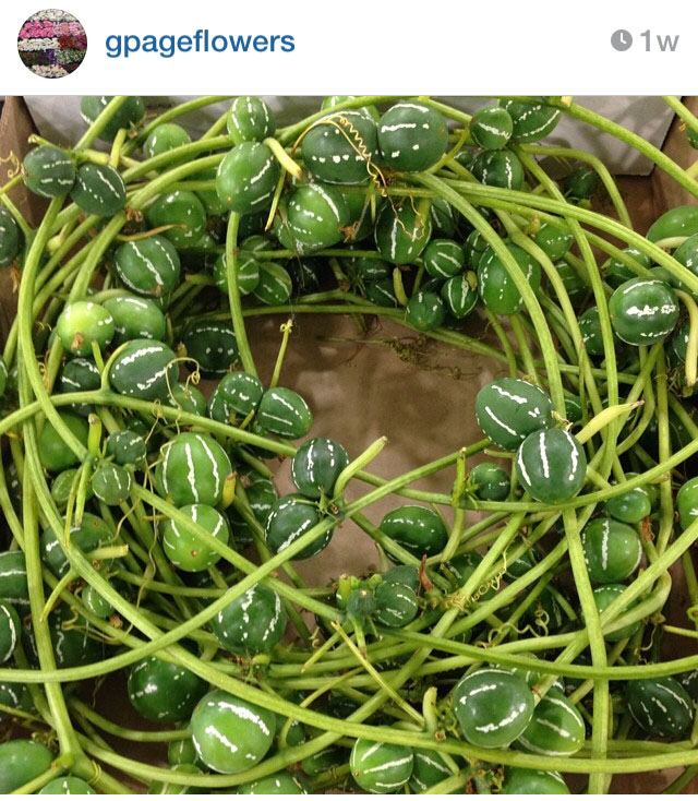 G Page Flowers on Instagram
