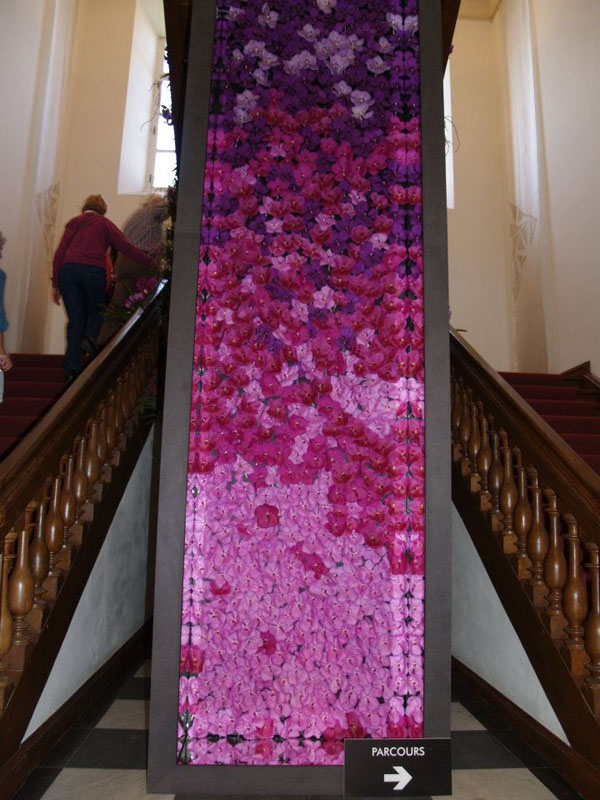 Geert Pattijn - orchid flower wall